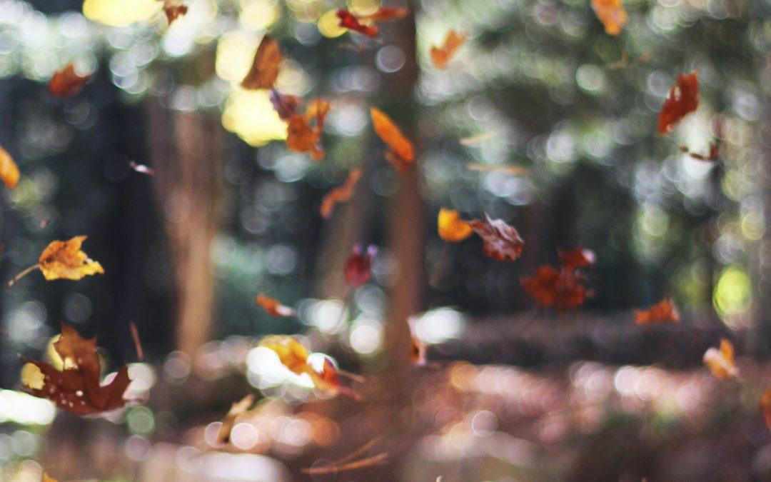 ✦ Equinócio de Outono